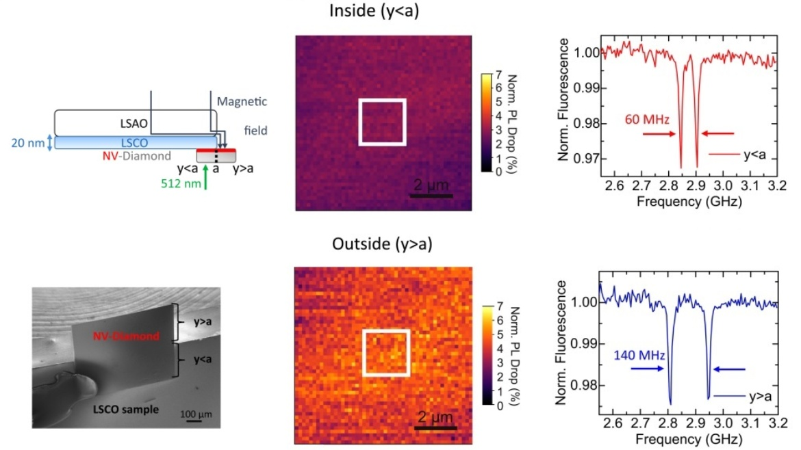 Microscopic studies on thin film superconductors play an important role for probing non-equilibrium phase transitions and revealing dynamics at the nanoscale. However, magnetic sensors with nanometer scale...