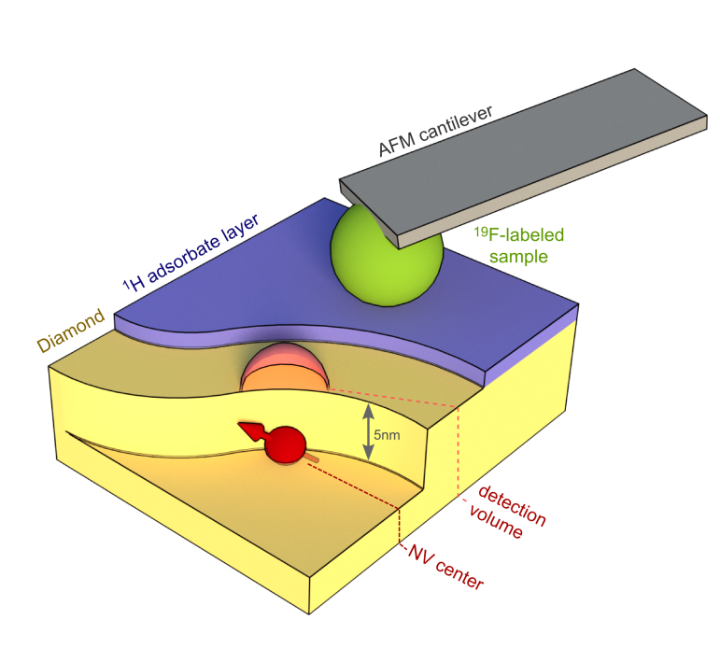 Scanning probe microscopy (c)