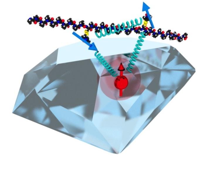 Molecular spin network (c)
